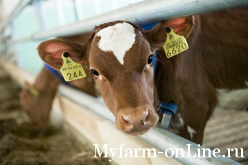 Calf_feeder_title_page_358_x_239